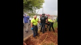 IMAGES: Puppy rescued from storm drain pipe - (8/12)