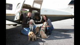 IMAGES: Flypups organization rescues - (2/6)