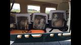 IMAGES: Flypups organization rescues - (4/6)