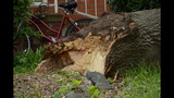 IMAGES: Family displaced after tree crashes… - (1/14)