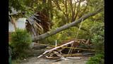 IMAGES: Family displaced after tree crashes… - (11/14)