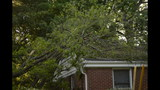 IMAGES: Family displaced after tree crashes… - (14/14)