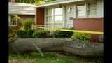 IMAGES: Family displaced after tree crashes… - (8/14)