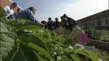 IMAGES: Teachers working to bring gardens to schools - (2/8)