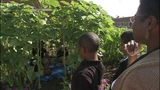 Family Focus_ Teachers working to bring gardens to schools  _5347235