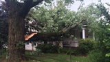 IMAGES: Tree falls on house with woman inside… - (1/7)