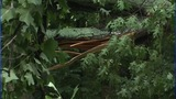 IMAGES: Microburst leaves damage in Cherryville - (8/8)