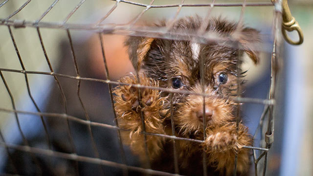 Humane Society Releases Update On Puppy Mill Rescue Wsoc Tv
