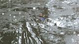 Officials_ Boy fell through ice in Rowan County lake_6642478