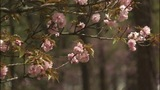 Charlotte towards top of 100 worst allergy cities_7073611