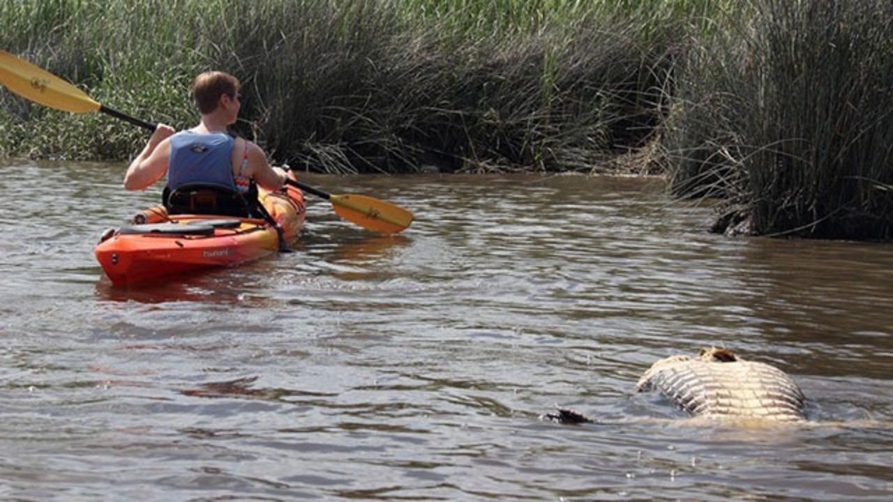 5 Alligators Found Butchered In Sc River Wsoc Tv