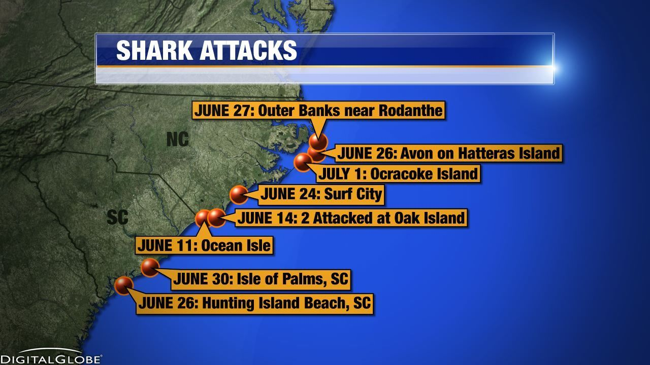 Researchers Say Expect More Shark Bites Off Nc This Summer