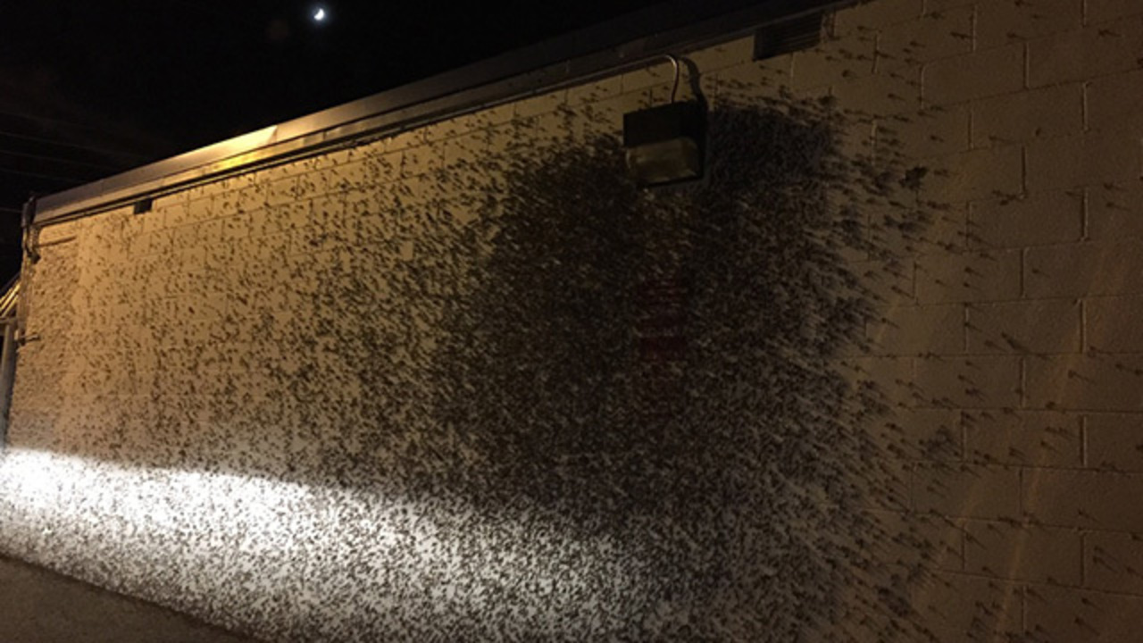 MUST SEE: Mayflies swarm in Gaston County towns | WSOC-TV