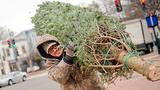Christmas tree shortage_8441123