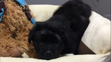Two teens arrested after puppy shot with BB gun, police say