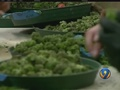 NC lawmakers again try to legalize medical marijuana