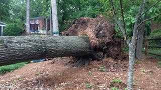 PHOTOS: Large tree falls in southeast Charlotte neighborhood