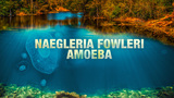 11-year-old girl dead after contracting brain-eating amoeba