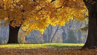 Fall foliage on the trails