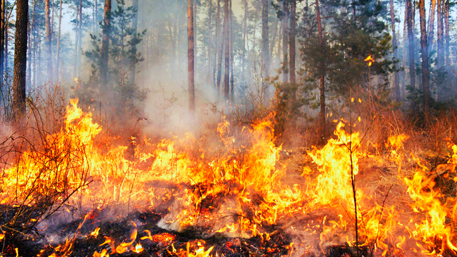 Nc Wildfires Horton Fire 100 Percent Contained Wsoc Tv