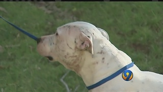 CMPD deals with rise in dog attacks, some classified as severe