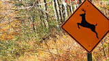 South Carolina woman killed by deer struck by car in front of her