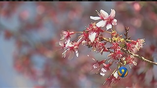 Charlotte allergy season could be one of worst in decades