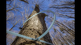 Mecklenburg County, Trees Charlotte partner to encourage improving environment