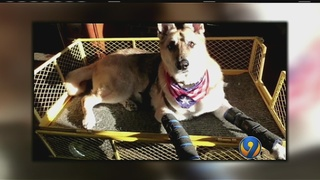 Therapy dog attacked by coyotes in Union County