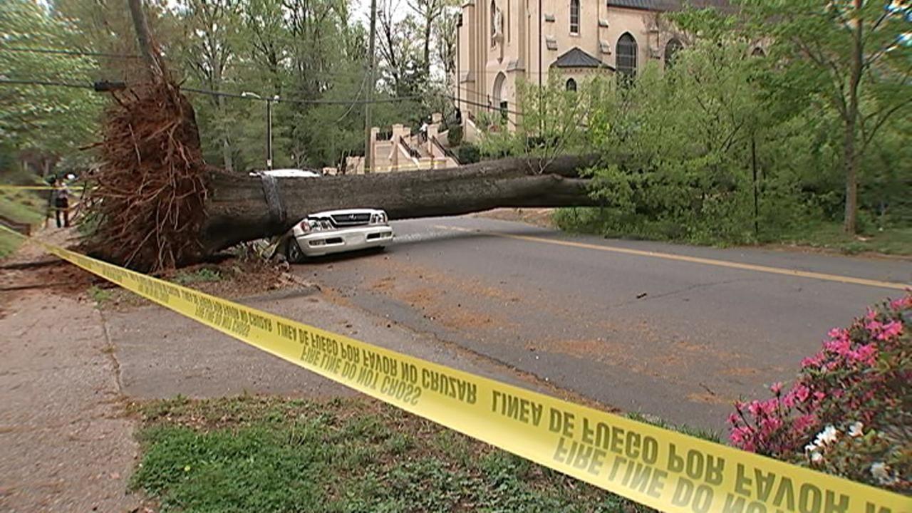 City Tree Fell On My Car