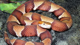 IMAGES: Snake sightings in the area - (8/17)