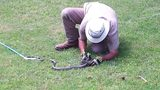 IMAGES: Snake sightings in the area - (16/17)