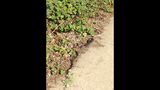 IMAGES: Snake sightings in the area - (10/17)