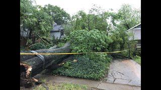 IMAGES: Trees crash down during relentless rain