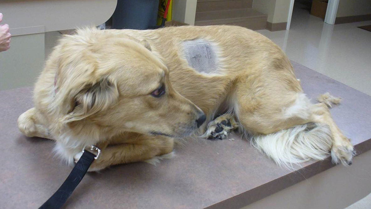 Is Tramadol For Dogs The Same For Humans