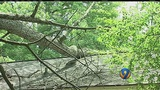 Fallen tree limbs create dangerous conditions for firefighters in east Charlotte