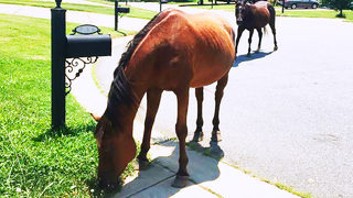 REINED IN: Owners found after horses roam Mt. Holly neighborhood