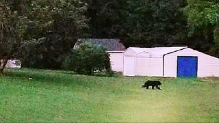 Another black bear sighting reported in Lincoln County