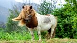 CMS may allow miniature horses inside the classroom