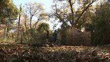 Homeowner says fiber crew butchered his trees