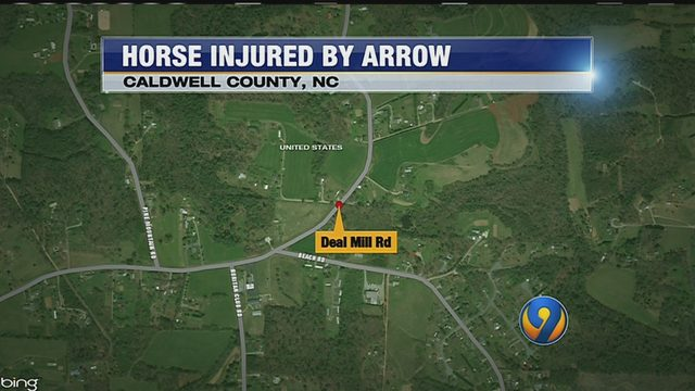 Horse in Caldwell County shot with arrow
