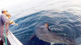 Crew catches 2 great whites in 5 minutes off South Carolina coast