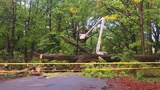 Clean-up underway after flash flooding, trees toppled across region