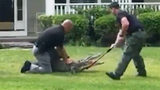 UNEXPECTED GUEST: Officers wrangle alligator from porch in SC