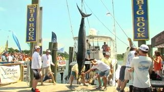 CATCH OF THE DAY: 16-year-old reels in 400-pound marlin off NC coast