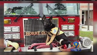 K-9 snatched from SC firefighter