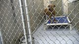 More than a dozen dogs saved from dogfighting ring in Concord, officials say