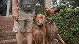 City sets traps after coyote confronts man, bites dog