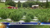 NC Hemp Garden becoming too popular