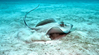 OUCH: Rise in stingray, jellyfish encounters along Carolina coast